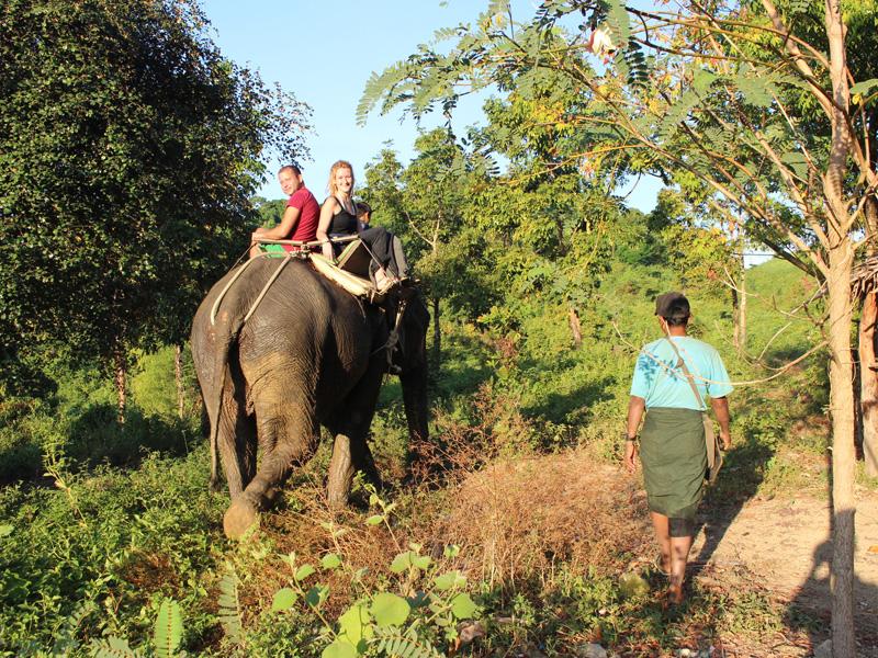 Ngapali olifant